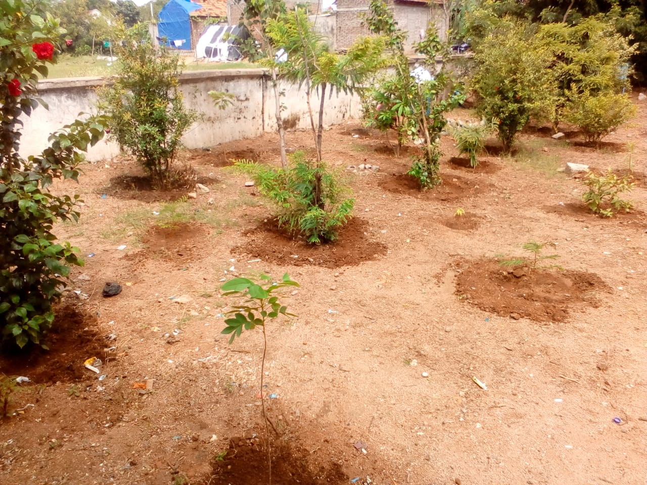 Planted trees by Earth Kids